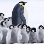 Putování tučňáků: Volání oceánu – 19. 6. 2017